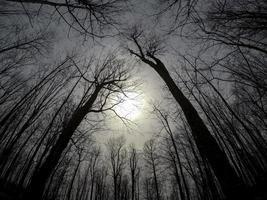 silhouette di alberi in una foresta