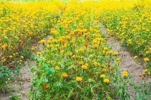 prato di fiori foto