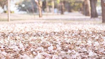 petali rosa sul terreno foto