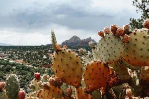 vista di cactus nel deserto foto