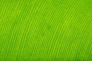 modello foglia verde