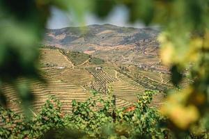 vigneti nella valle del douro, portogallo foto
