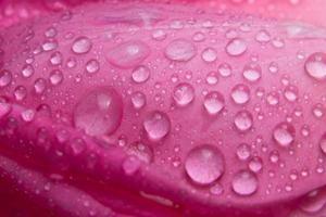 goccioline d'acqua sui petali di una rosa rosa