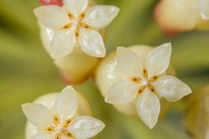 primo piano del fiore bianco