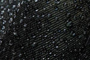 gocce d'acqua su una piuma