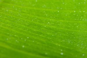 gocce d'acqua su una foglia verde foto