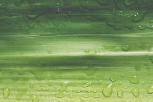 gocce d'acqua su una foglia