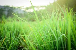 primo piano di erba