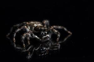 ragno sullo specchio nero