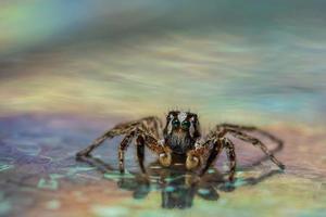ragno su una superficie bagnata