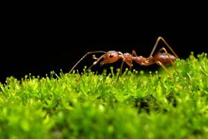 formica nell'erba