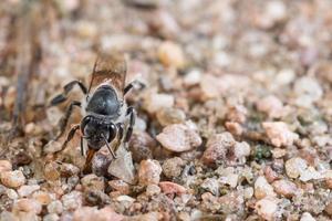 ape sul terreno foto