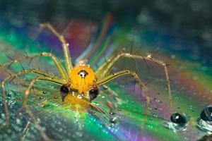 ragno su uno sfondo riflettente