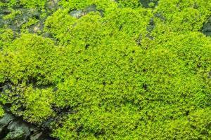 sfondo verde muschio foto