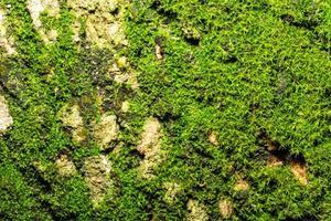 sfondo di corteccia verde foto