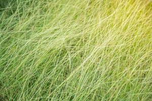 sfondo di erba illuminata dal sole