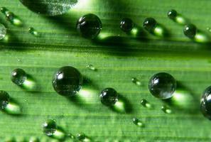gocce d'acqua sulla pianta