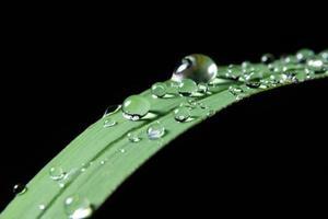 gocce d'acqua su una pianta