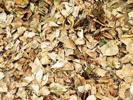 foglie marroni secche foto