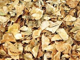consistenza delle foglie secche foto