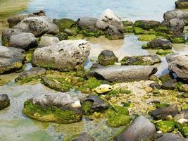 muschio sulle rocce foto