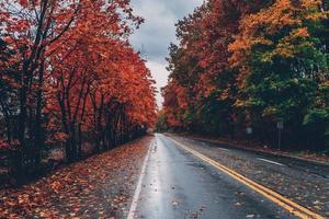 alberi autunnali lungo una strada foto