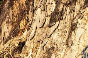 sfondo di corteccia di albero