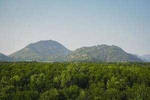 montagne sopra le cime degli alberi foto