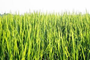 campo in erba durante il giorno foto