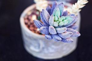 primo piano di una succulenta foto