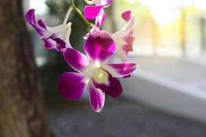 primo piano di orchidee viola foto