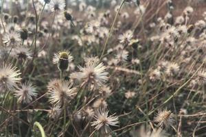 fiori erba su un prato di luce solare natura autunno sfondo foto