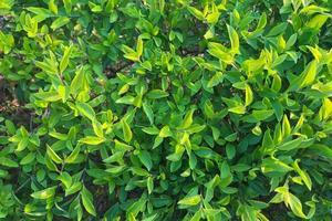 primo piano di foglie verdi durante il giorno foto