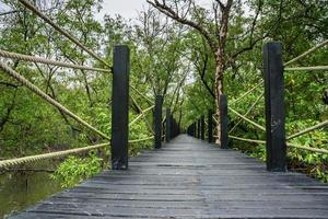 passerella nella foresta di mangrovie