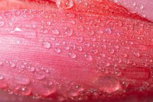 gocce d'acqua su un fiore foto