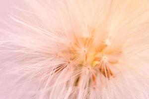 primo piano del fiore selvatico