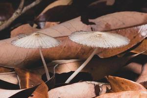 funghi selvatici nella foresta foto