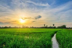 campi di riso al tramonto foto
