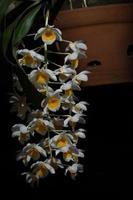 fiore bianco su sfondo nero