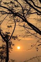 silhouette di alberi al tramonto