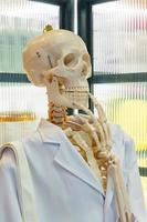 scheletro o testa di cranio che indossa camice da laboratorio scientifico bianco. materiale didattico