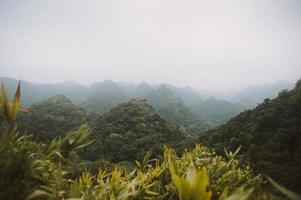giungla in vietnam foto