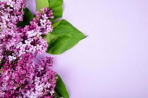 vista dall'alto di fiori lilla isolati su sfondo di colore rosa con spazio di copia foto