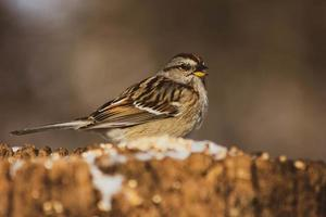 uccello grigio e marrone nella fotografia di messa a fuoco selettiva foto