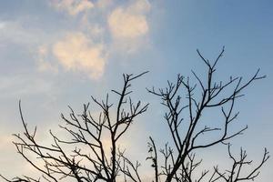 albero secco con cielo blu foto