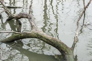 ceppi nell'acqua foto