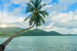 albero di cocco su koh chang