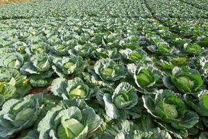 fattoria di ortaggi in estate foto