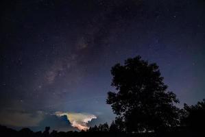 sagoma di un albero di notte