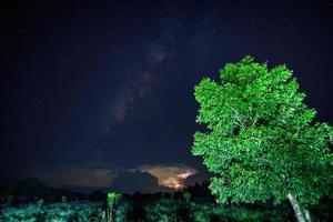 albero verde di notte